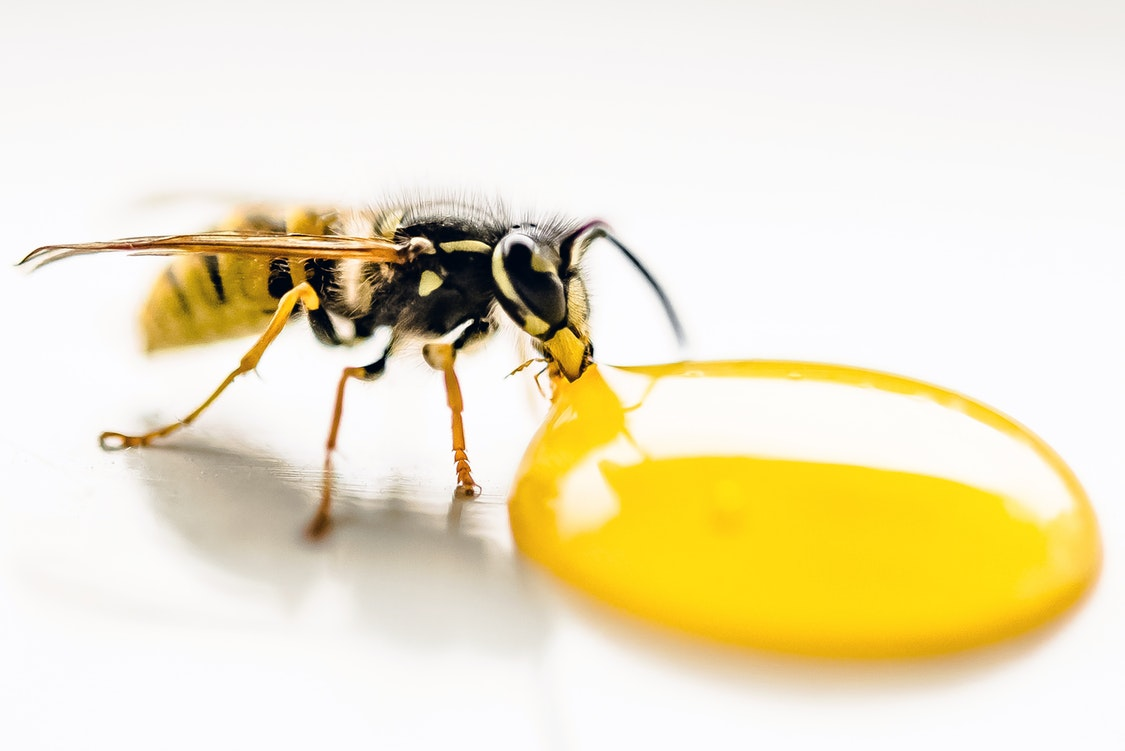 Guidelines for Managing Pests in Your Property